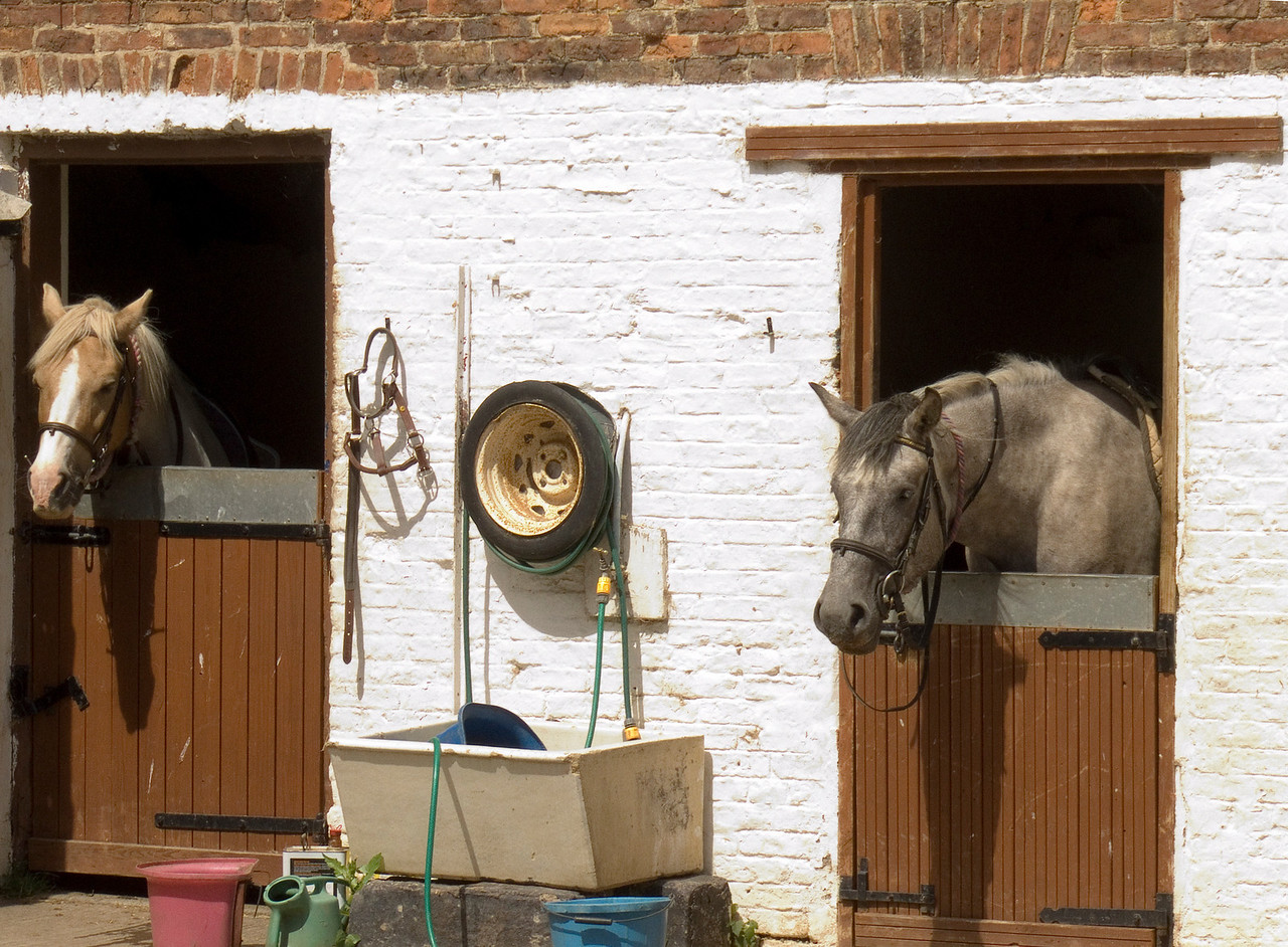 A Couple of the horses at the stables in Haggerston Castle