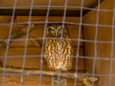 One of the owls at the Barn at Beale