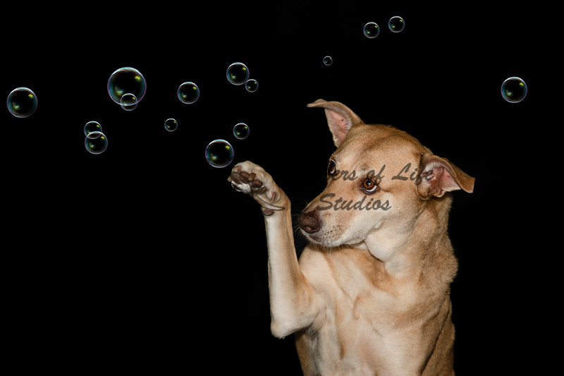 _D856285-Edit-bubbles