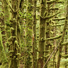 Dense temperate rainforest at Mathers Creek