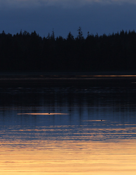 Sunset at Portage Bay