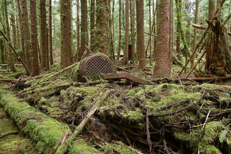 Abandoned logging camp at Mathers Creek