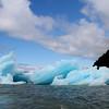 Iceberg in LeConte Bay