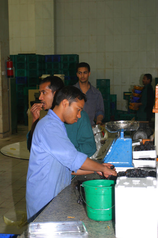 The Bengalis and Pakistanis working in the factory.