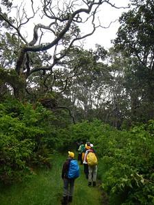 Wilderness Volunteers: 2017 Hakalau Forest National Wildlife Refuge (Hawaii) Service Trip