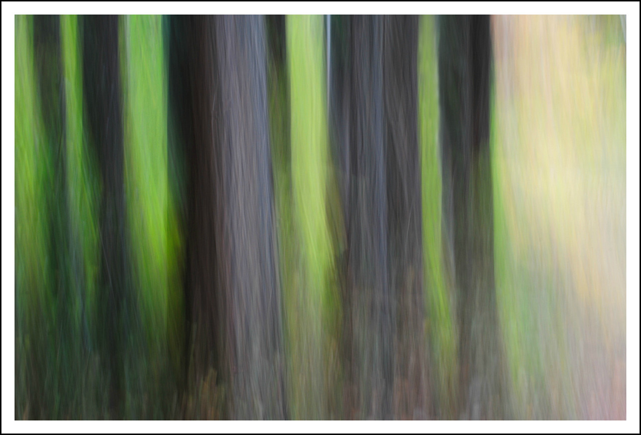 Trees.  Intentional camera movement