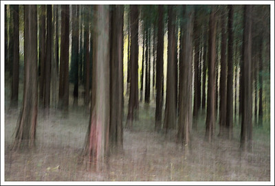 The forest at the edge of west Ashinoko.    Intentional camera movement at 1/5 of a second.