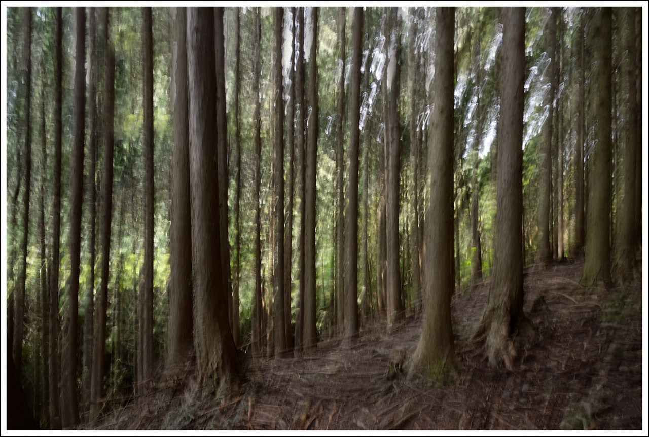 The forest on the way to the Flying Dragon waterfall.  Slow shutter speed and multiple exposure combined.