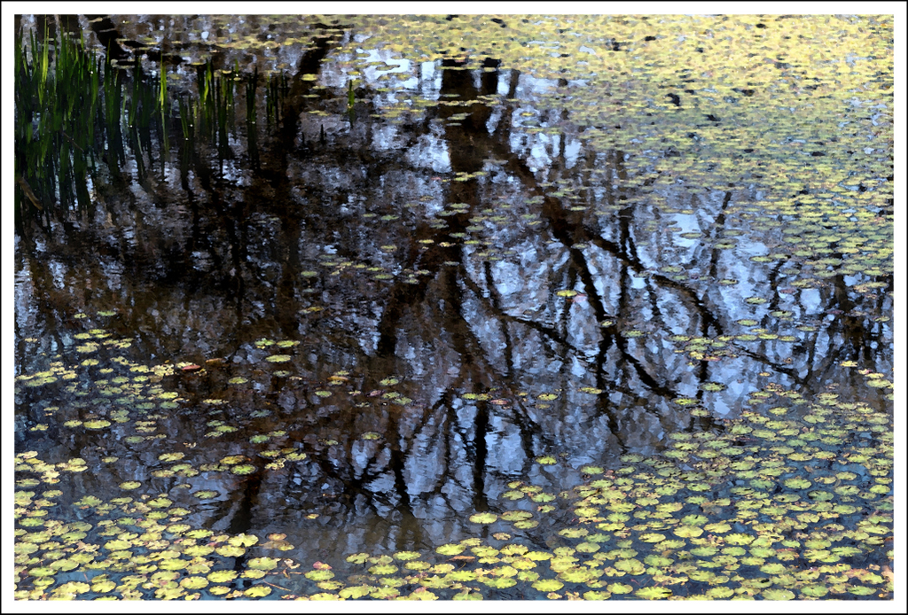 A reflection in one of the ponds in the the botanical gardens in Sengokuhara.