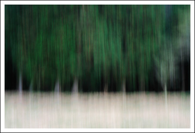 Waiting for winter.  Intentional camera movement.