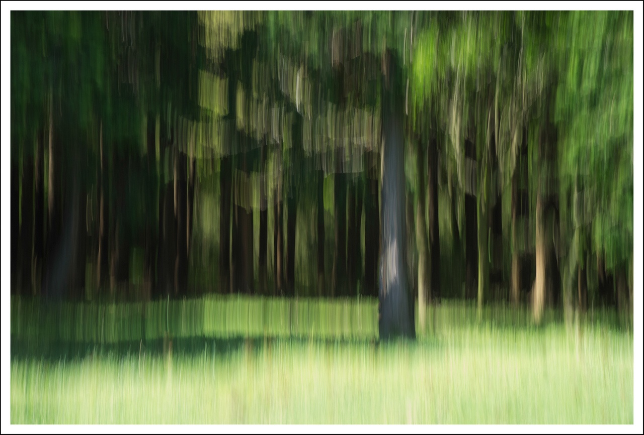 Intentional camera motion at the edge of the forest.