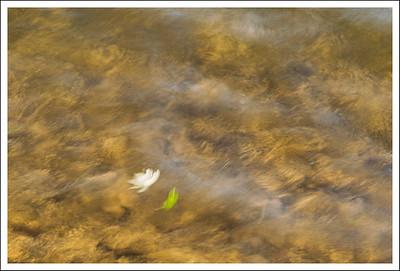 Long exposure of leaves floating in the water.