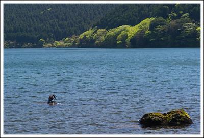 A cormorant in the lake