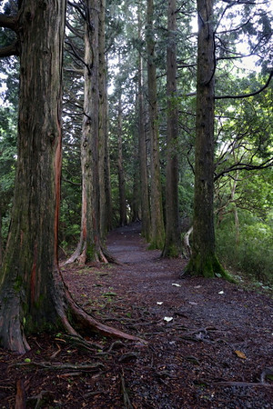 Part of the old tokaido highway that is lined with cedars.