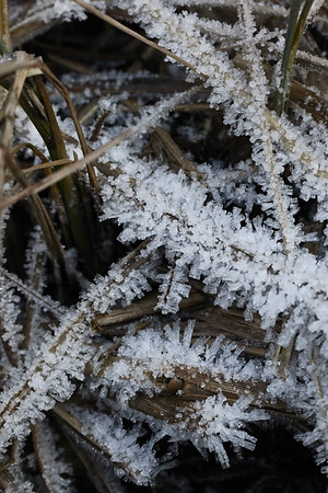 Frost on the hiking trail