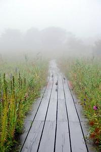 Wild quails in the fog.