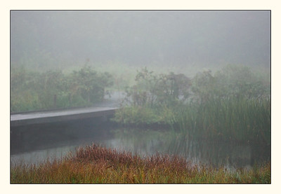 Marshland in color.
