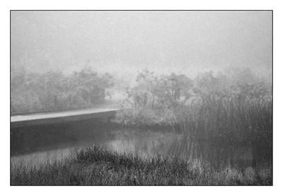 Marshland in black and white.