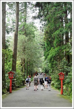 The approach to Hakone shrine.