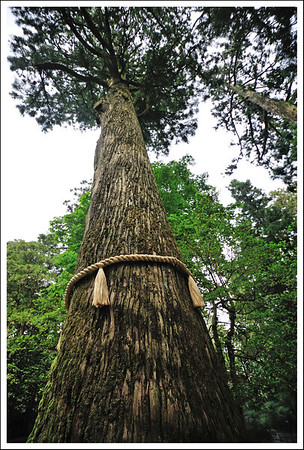 The sacred tree.