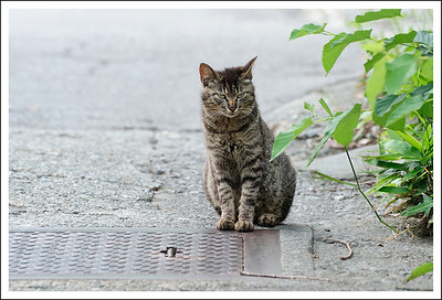 One of the many stray cats.