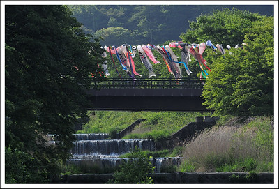 Koinobori across the stream at the foot of the mountain - on the way home.