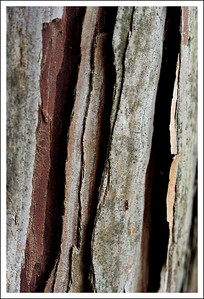 Close up of some tree bark.  I think this was from a Japanese cypress.