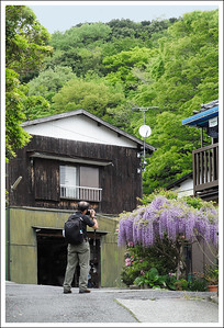 A wisteria growing at a home/small business just before the trailhead.