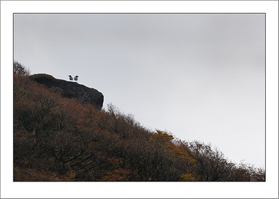 Two crows on lookout rock.  This was on the hike down from Komagatake.