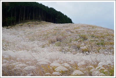 Single exposure of the same scene, but I changed the white balance to make the greens, greener and the yellows white.