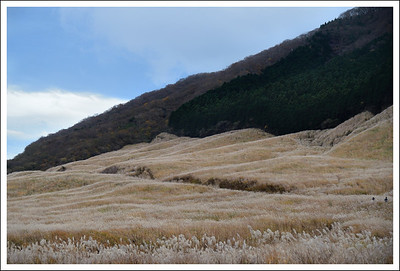 We also went to visit the pampas grass fields adjacent to the botanical gardens.