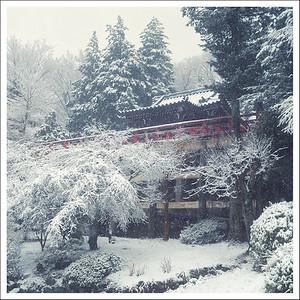 Snowy Hakone winter 2013
