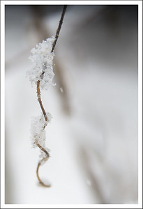 Just a twig with snow.