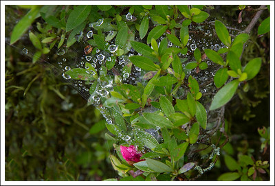 Because of the fog and mist, there were many of these dewy spider webs.
