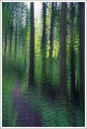 The Forest in Motion