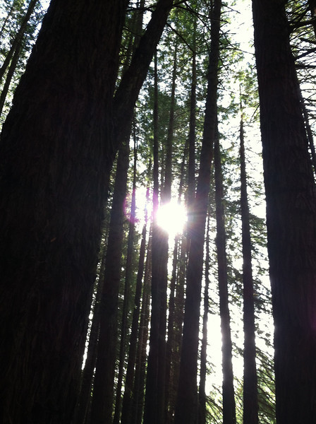 Ai 2/16 polipoli forest