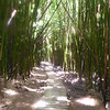 bamboo forest--before our work