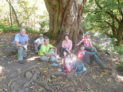 Lee, Joyce, Jeanne, Nancy, Suzi, Rose along the Pipiwai trail