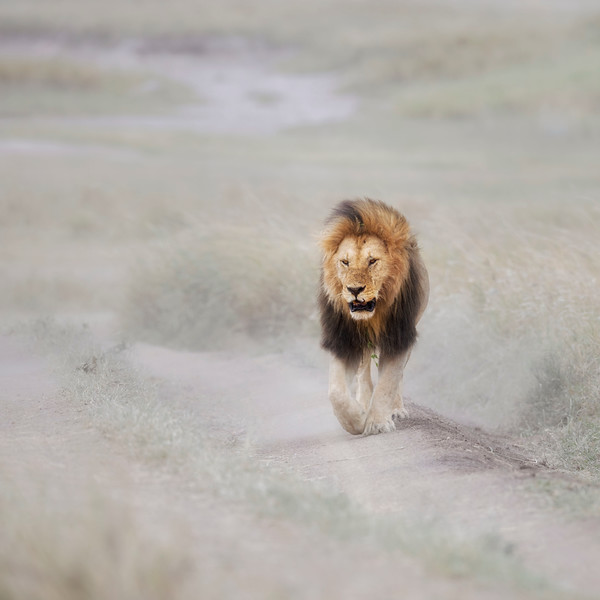 The king takes a stroll