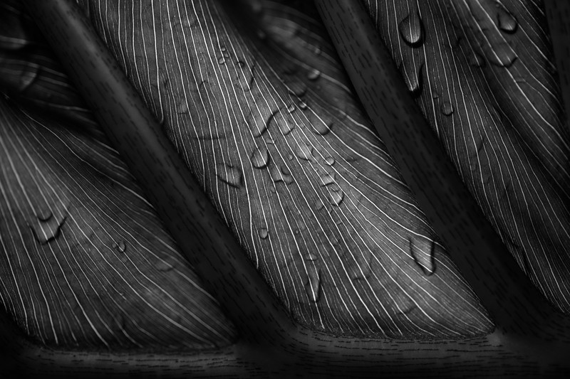 Palm leaf after the rain