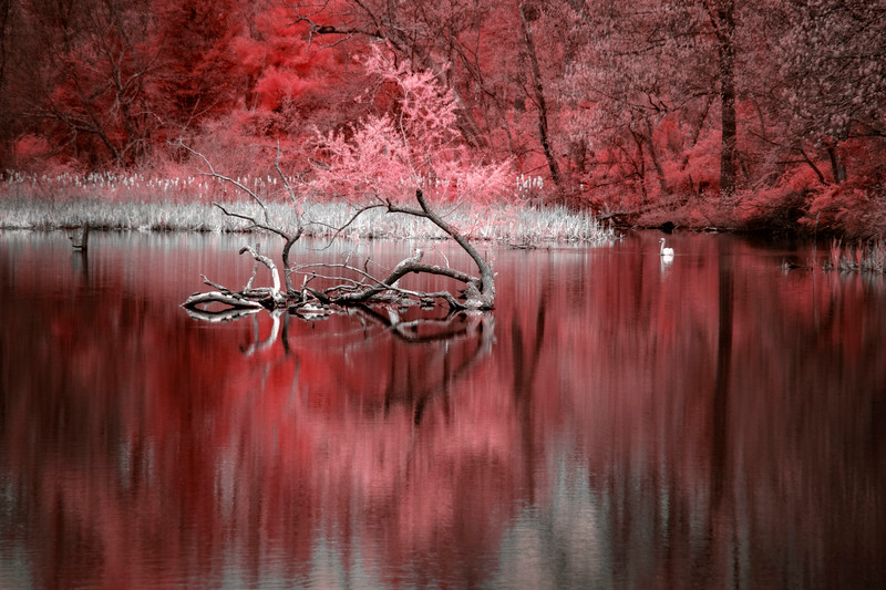 Butterfly pond, red.