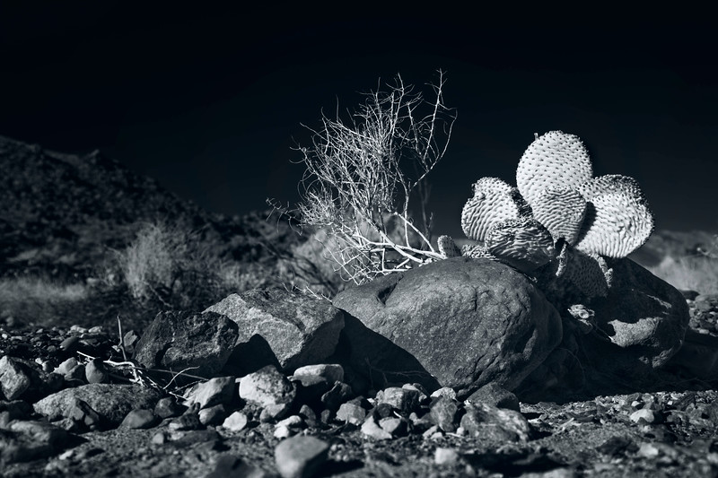 Cactus amongst the rocks, Infrared