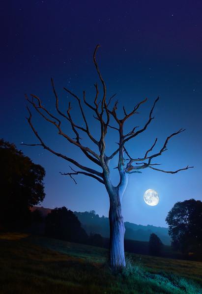 Supermoon and skeleton tree