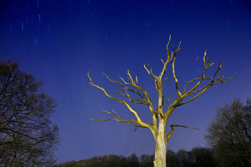 The milky way above a skeleton tree at Mytholmroyd, West Yorkshire. I used a 16 minute exposure for this shot. You can see the axis of the earths rotation in the stars.