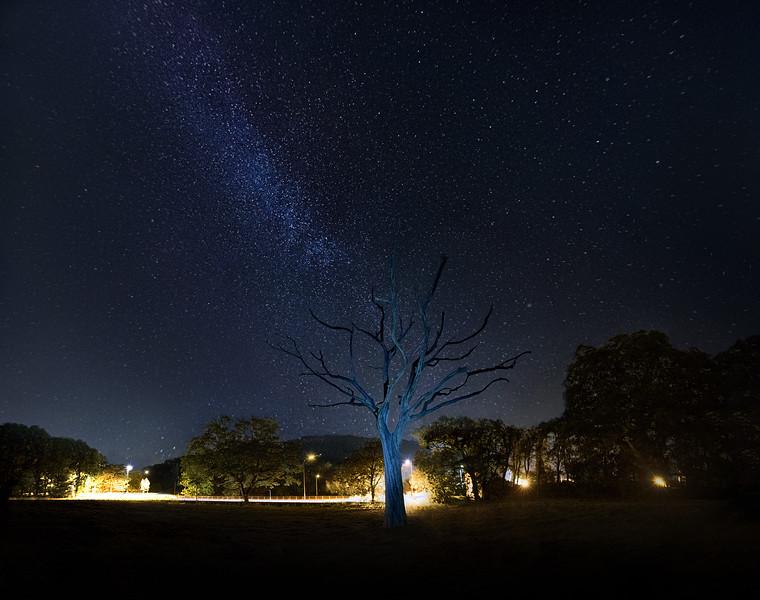 Skeleton Tree and stars