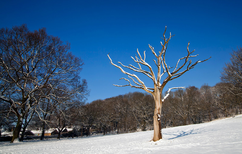 Skeleton tree in snow, Mytholmroyd.
