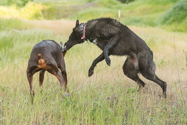 03 30 2016 CREEK DOGS-1511