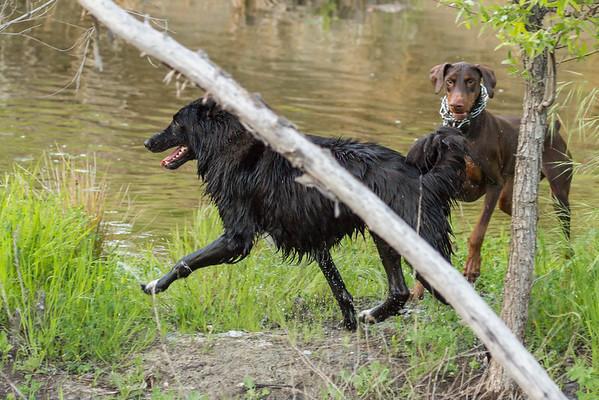 03 30 2016 CREEK DOGS-0755