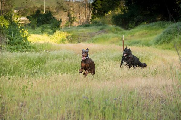 03 30 2016 CREEK DOGS-1502