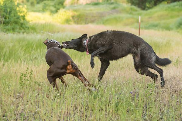 03 30 2016 CREEK DOGS-1512